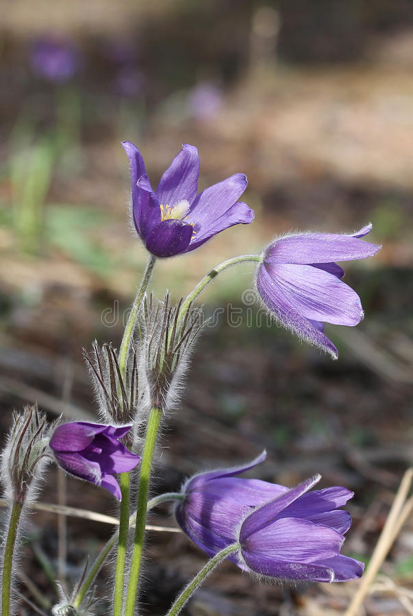 Nette violette Blumen lizenzfreie stockfotografie