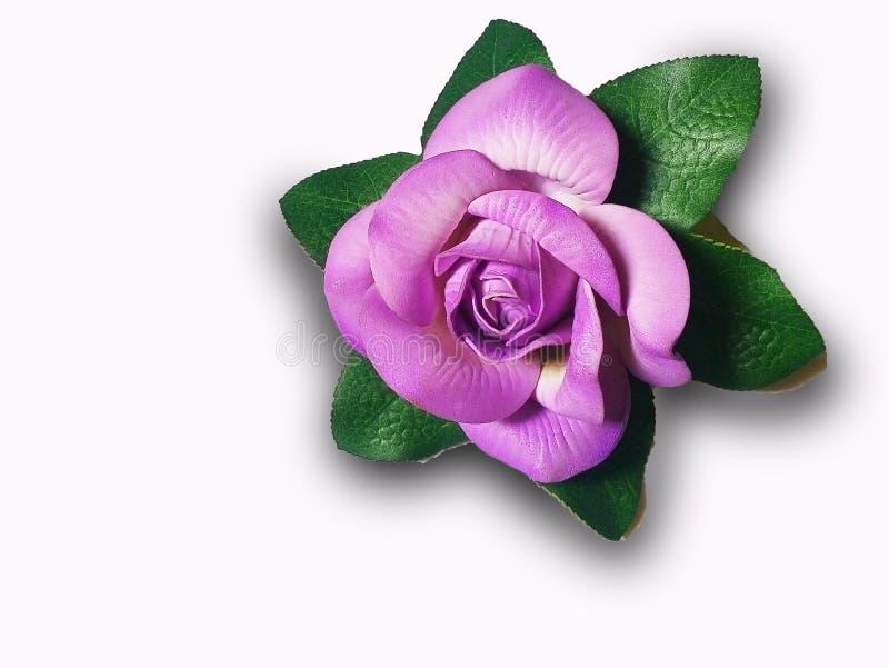 Nette violette Farbblume auf weißem Hintergrund stockfoto