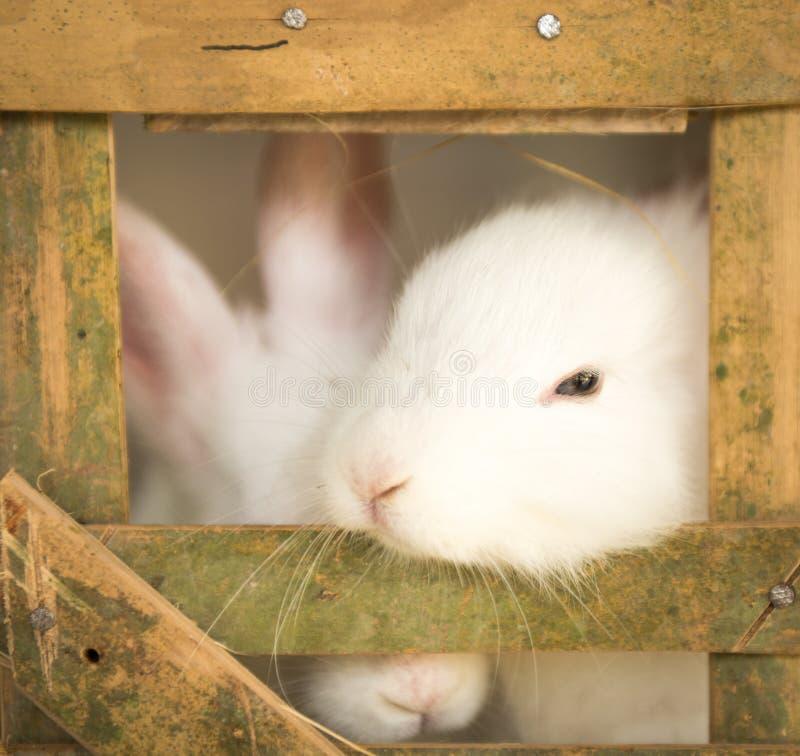 Nette weiße Kaninchen im Käfig lizenzfreie stockbilder