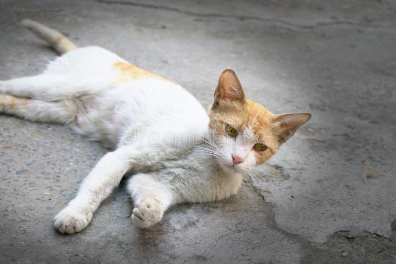 Nette weiße Katze mit einer interessanten Haltung und einem neugierigen Ausdruck stockfotografie