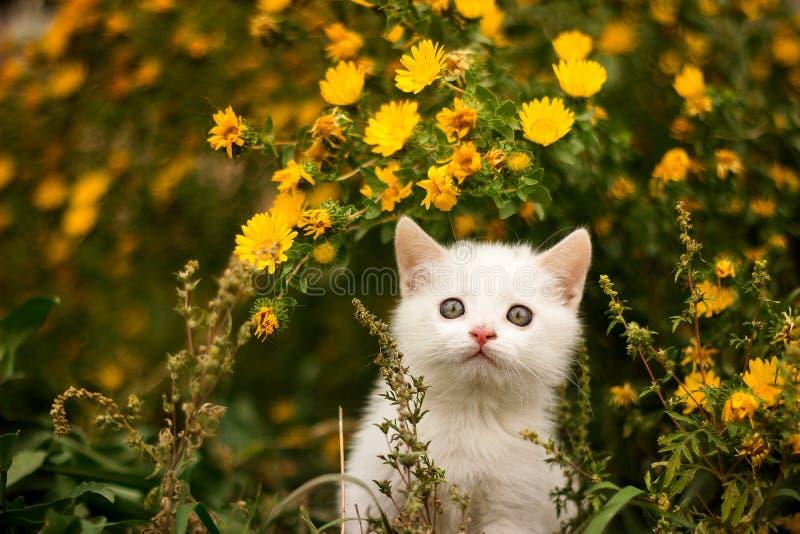 Nette weiße Katze, die oben zu etwas im Garten schaut stockfoto