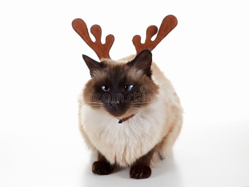 Nette Weihnachtsren-Haustierkatze Humorvolles Konzept Lokalisiert auf Weiß stockbild