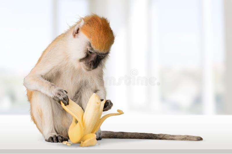 Netter Affe mit Banane auf hellem Hintergrund stockfotografie