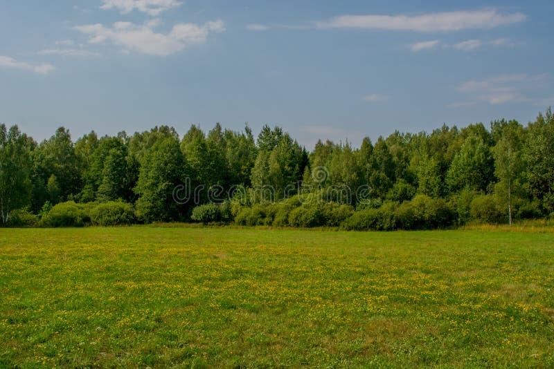 Netter Birkenwald und blaue Skylineansicht stockbild