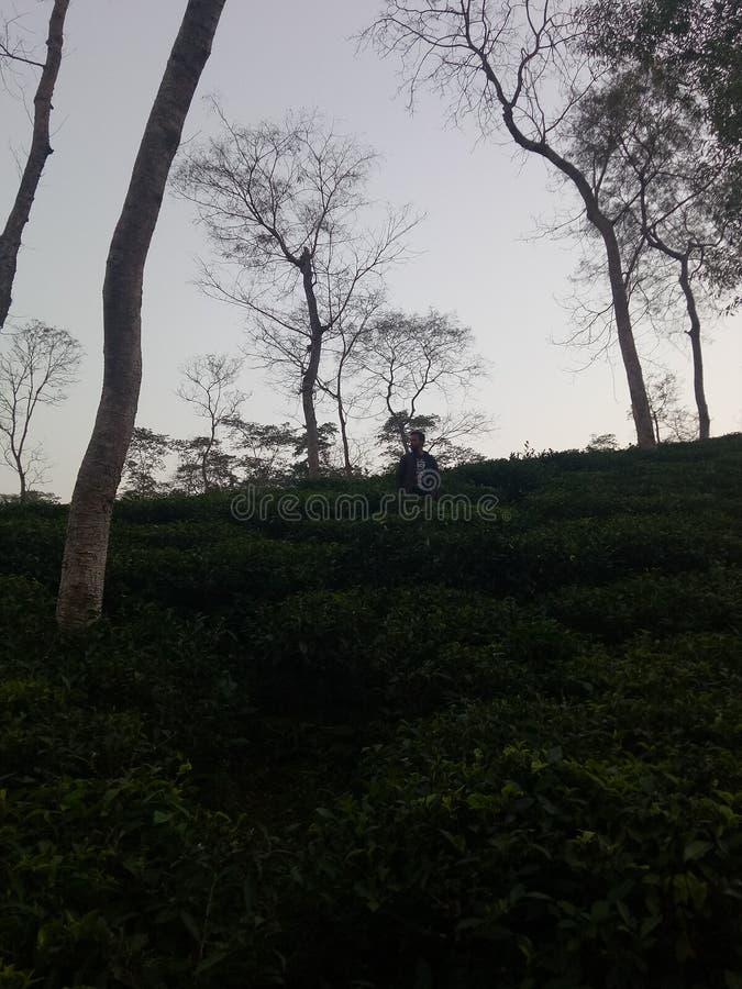 netter Blick des Teegartens stockbilder