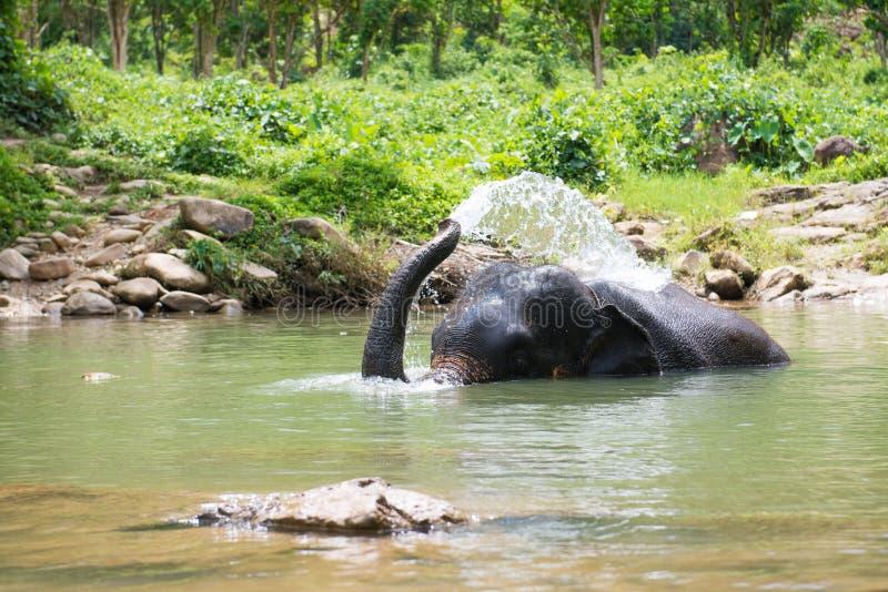 Netter Elefant spielt Wasser im Kanal lizenzfreie stockbilder