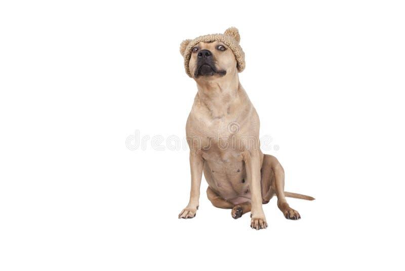 Netter entzückender Hund, der auf tragender Strickmütze des Bodens mit den Quasten lokalisiert auf weißem Hintergrund sitzt lizenzfreies stockbild