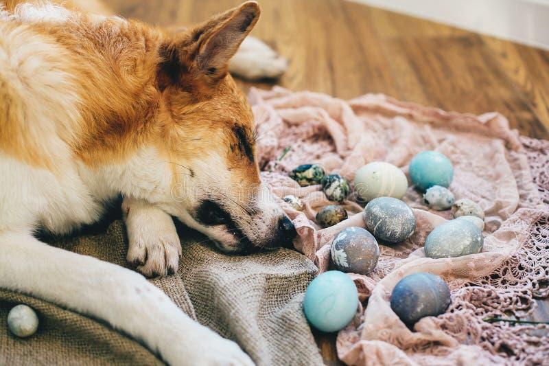 Netter goldener Hund, der an stilvollen Ostereiern auf rustikalem hölzernem Hintergrund im Licht schläft Moderne Ostereier gemalt lizenzfreie stockfotografie