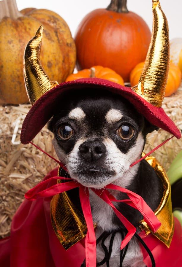 Netter Halloween-Teufel-Hund stockbild