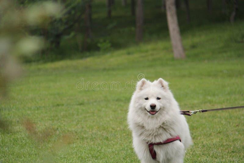 Netter Hund lizenzfreies stockbild