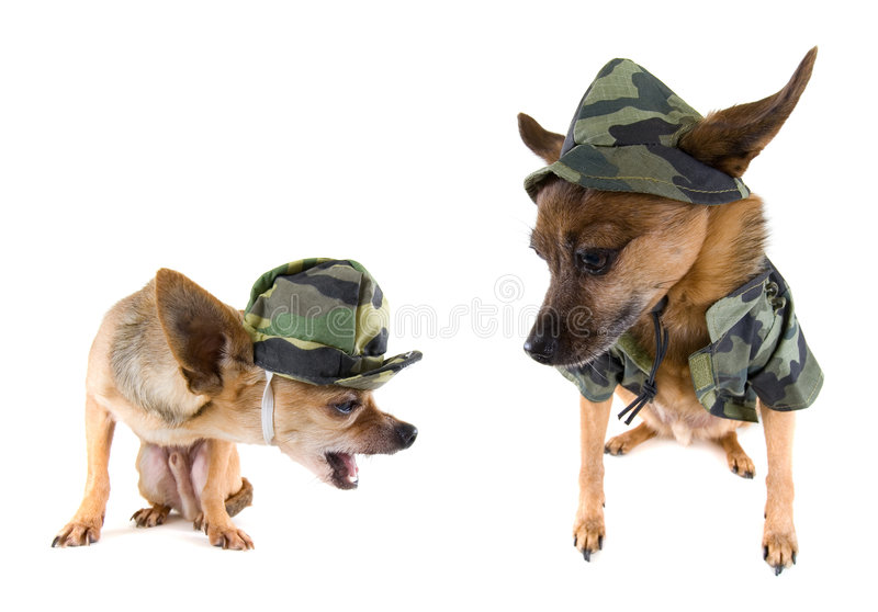 Netter Hund lizenzfreie stockbilder