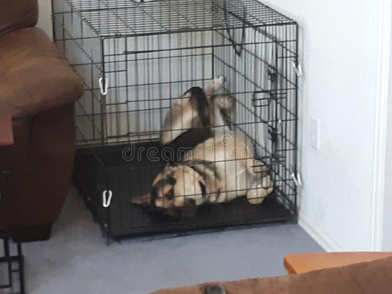 Netter Hund auf dem Rückseitenschlafen lizenzfreies stockfoto