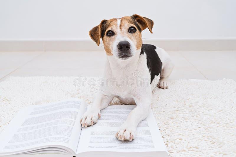 Netter Hund, der mit dem offenen Buch betrachtet Kamera liegt stockfoto