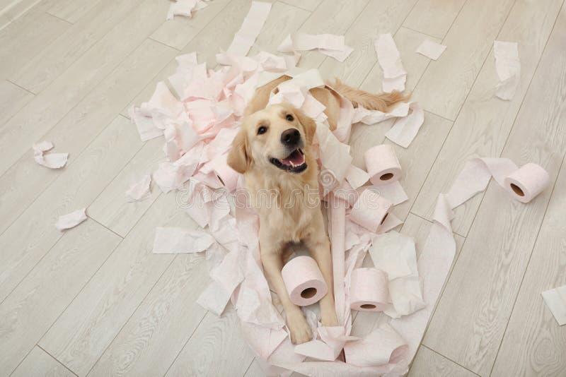 Netter Hund, der mit Toilettenpapier im Badezimmer spielt lizenzfreie stockbilder