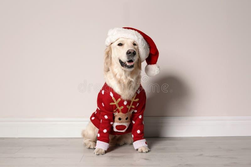 Netter Hund in der Weihnachtsstrickjacke lizenzfreie stockfotos