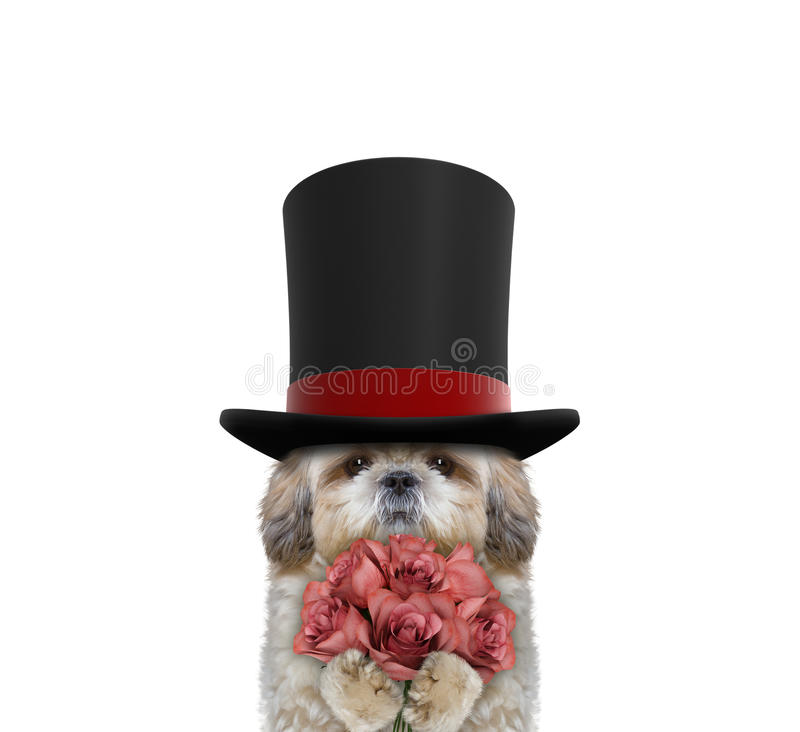 Netter Hund in einem Zylinder des hohen Hutes mit Rosen stockfoto