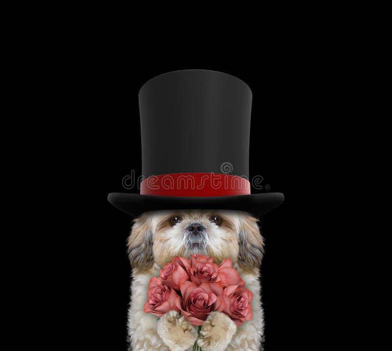 Netter Hund in einem Zylinder des hohen Hutes mit Rosen lizenzfreies stockbild