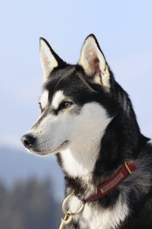 Netter Hund im Schnee stockbilder
