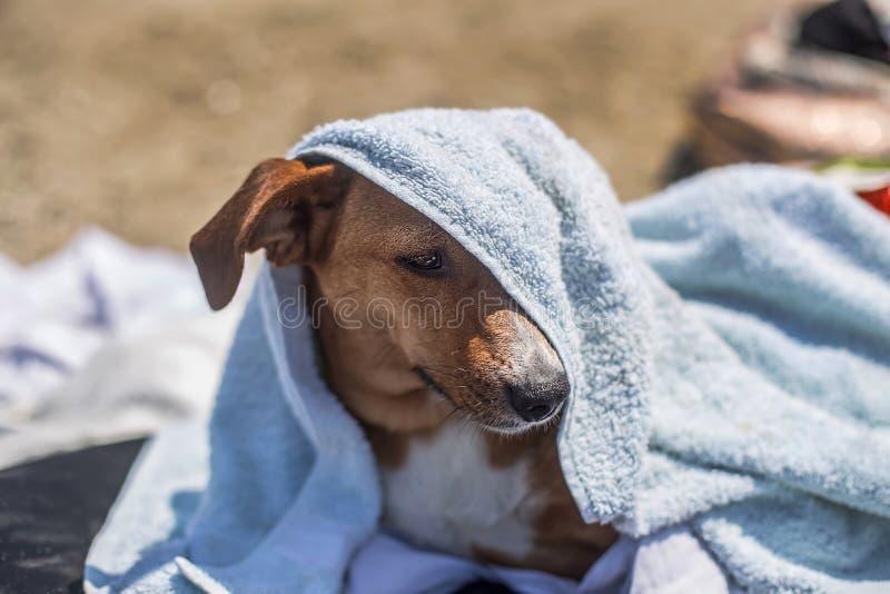 Netter Hund mit einem Tuch über seiner Mündung am Strand im Sommer stockfoto