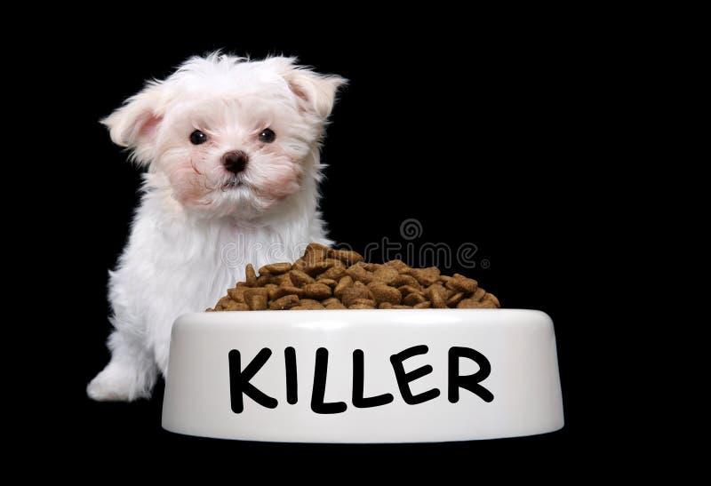 Netter Hund mit Hundeschüssel lizenzfreie stockfotografie
