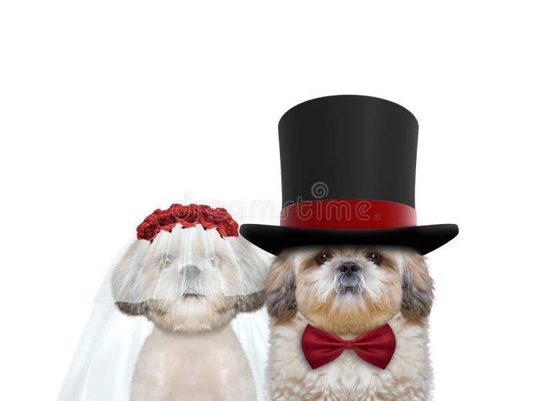 Netter Hundeglückliche Hochzeit Auf Weiß stockfotografie