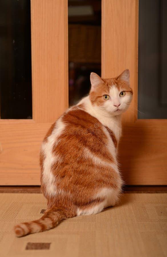 Katze, die durch Tür wartet lizenzfreie stockfotos