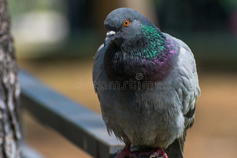 Netter interessierter Taubenvogelblick lizenzfreie stockbilder