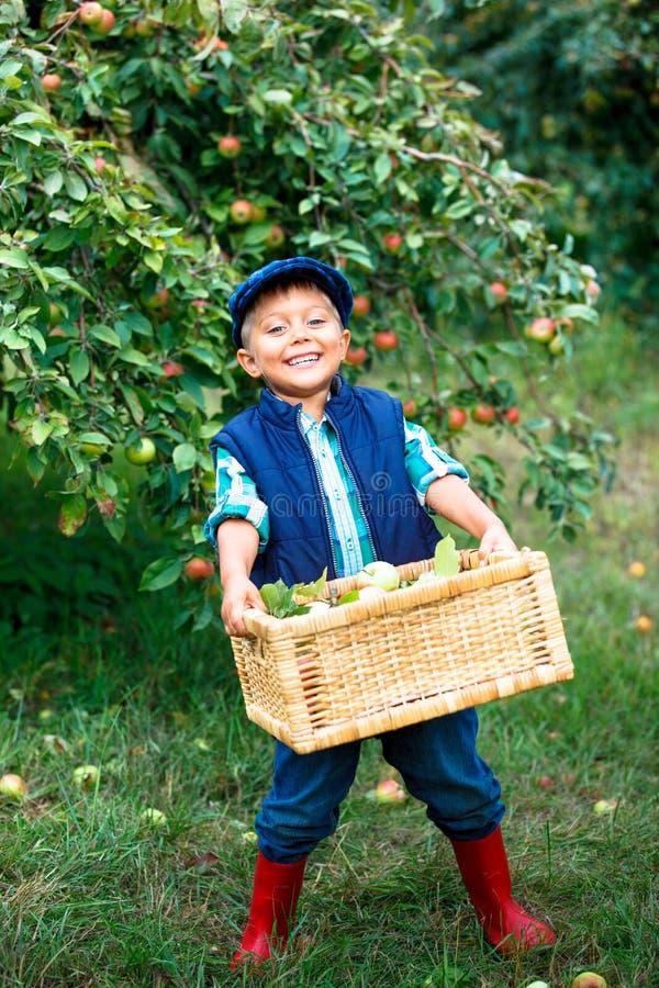 Netter Junge im Apfelgarten stockbild
