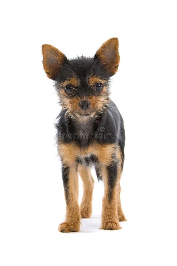 Netter junger Hund lizenzfreies stockfoto