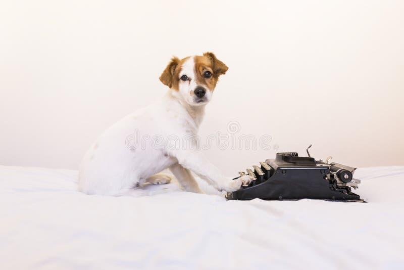 Netter junger kleiner Hund, der auf alter Retro- Schreibmaschinenmaschine an h schreibt stockfotos