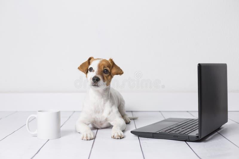 Netter junger kleiner Hund, der auf dem Boden sitzt und an Laptop arbeitet Tragende Gl?ser und Tasse Tee oder Kaffee au?er ihm ha stockfotos