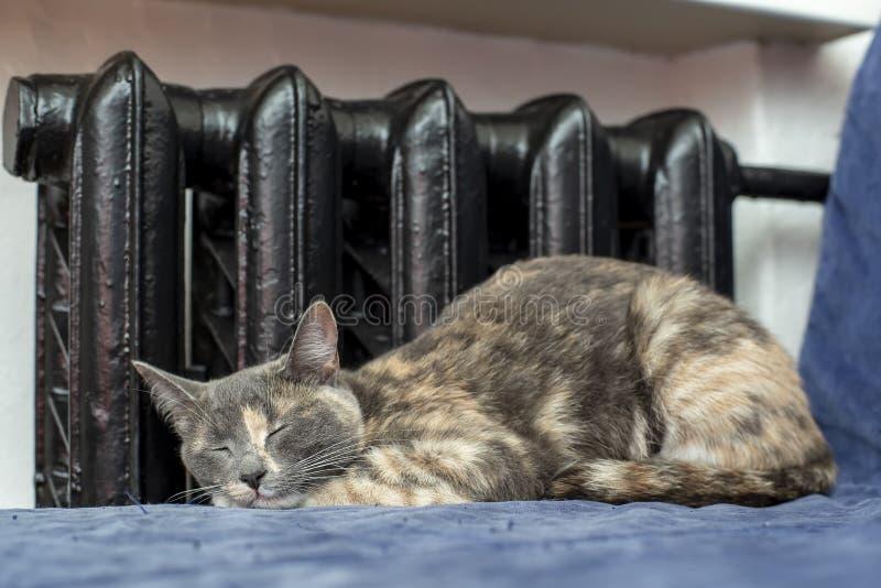 Netter Katzenmischling setzte ihre Tatzen unter ihren Kopf und Schlaf auf a stockbilder