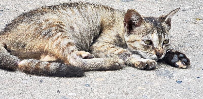 Netter Katzenrest auf Boden am sonnigen Tag lizenzfreie stockbilder