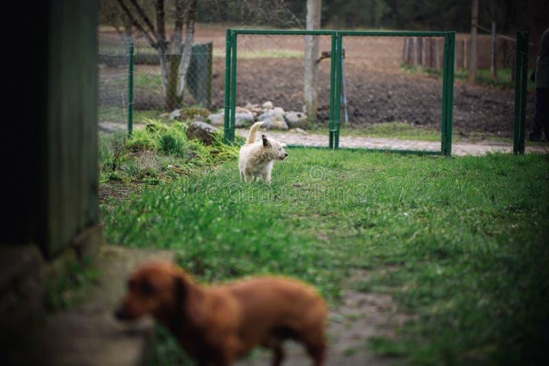 Netter kleiner Hund auf Natur schaut auf Dachshundhund in im Freien Glatt-haariger StandardDachshund in der Natur und im weißen k lizenzfreie stockfotografie