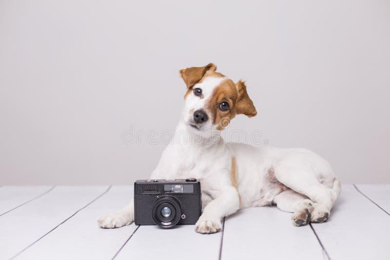 Netter kleiner Hund, der auf dem wei?en Boden sitzt Schauen intelligent und neugierig Weinlesekamera au?er ihm Haustiere zuhause stockbilder