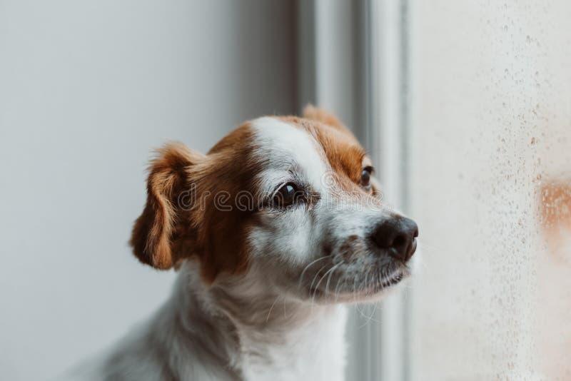 hund auf dem fenster bild bild 86303911