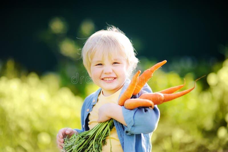 Netter kleiner Junge, der ein Bündel frische organische Karotten im inländischen Garten hält lizenzfreie stockbilder