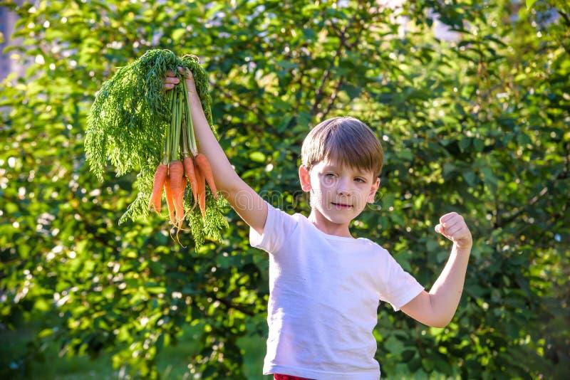 Netter kleiner Junge, der ein B?ndel frische organische Karotten im inl?ndischen Garten h?lt Gesunder Familienlebensstil F?lliger stockbild