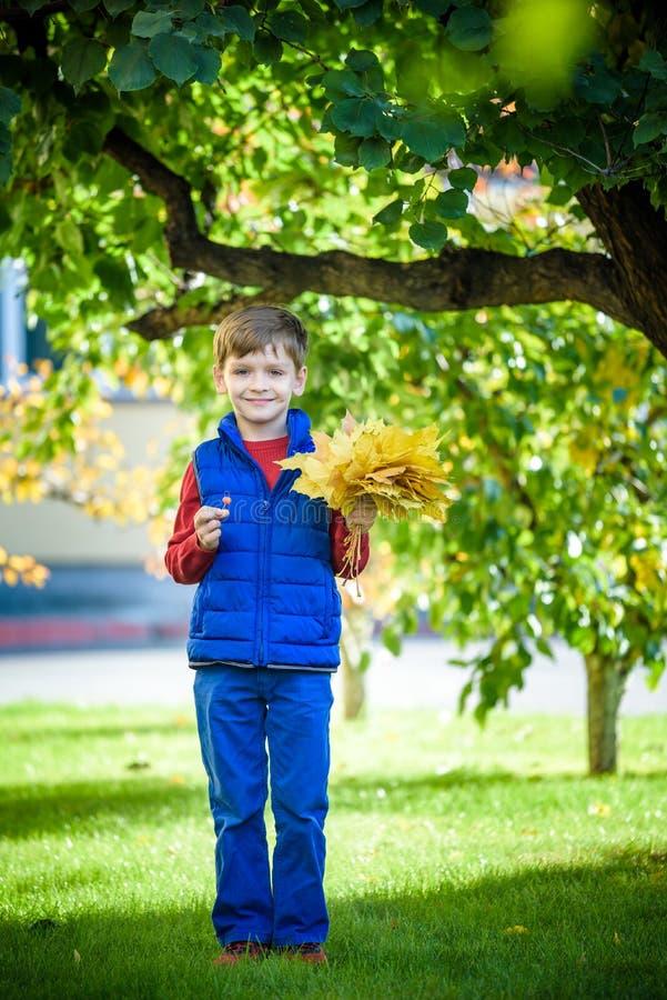 Netter kleiner Junge, der im Herbst auf Naturweg spielt Jungenholdingb?ndel Ahornbl?tter im Park Herbst, Kindheit und Leutekonzep lizenzfreies stockbild