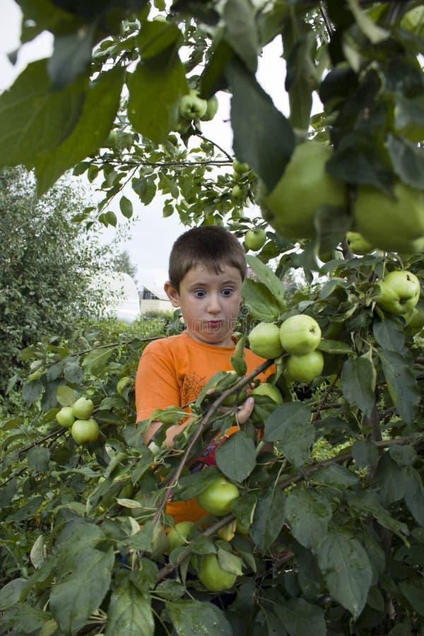 Netter kleiner Junge durch einen Apfelbaum mit Äpfeln stockfotografie