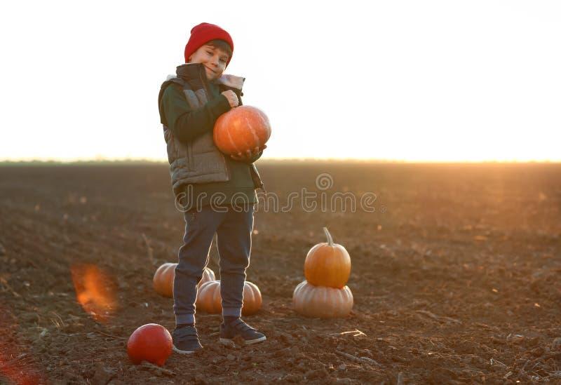 Netter kleiner Junge mit Kürbisen auf dem Herbstgebiet lizenzfreie stockfotos