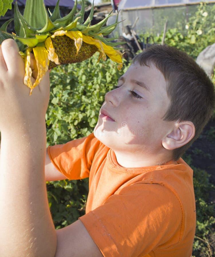 Netter kleiner Junge mit Sonnenblume stockfotos