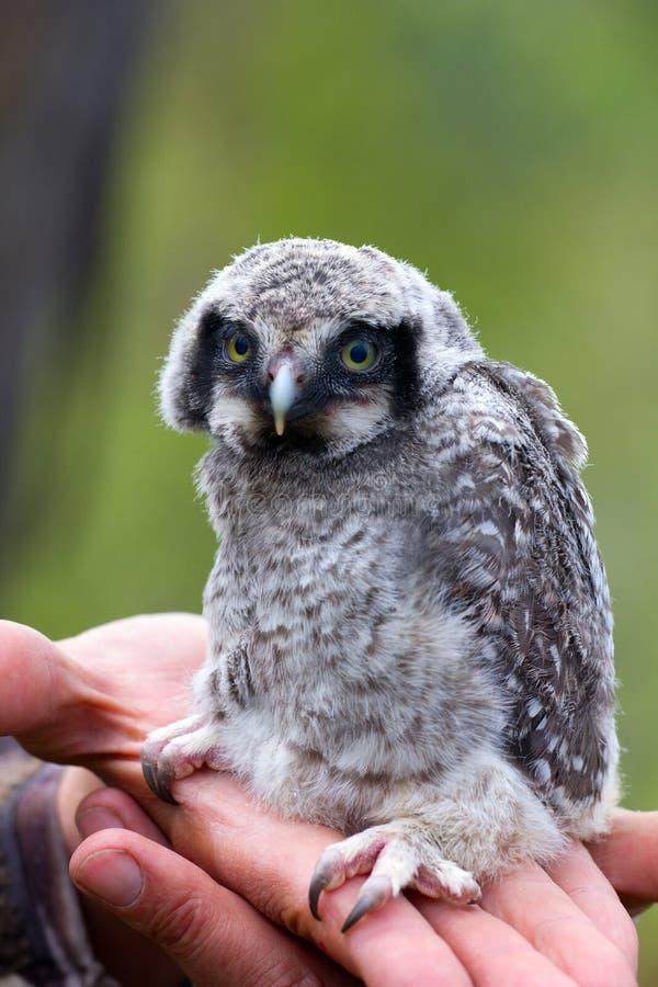Netter kleiner Teufel: mystischer Vogel lizenzfreie stockfotos
