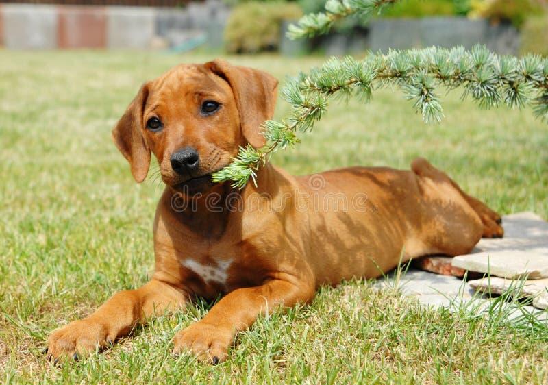 Netter kleiner Welpe, der im Garten spielt stockfotos