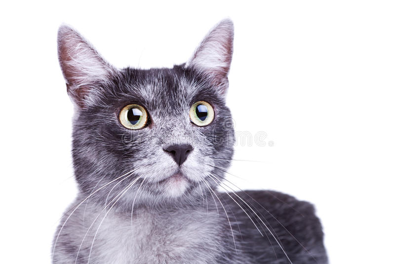 Netter Kopf einer neugierigen Katze lizenzfreie stockfotografie