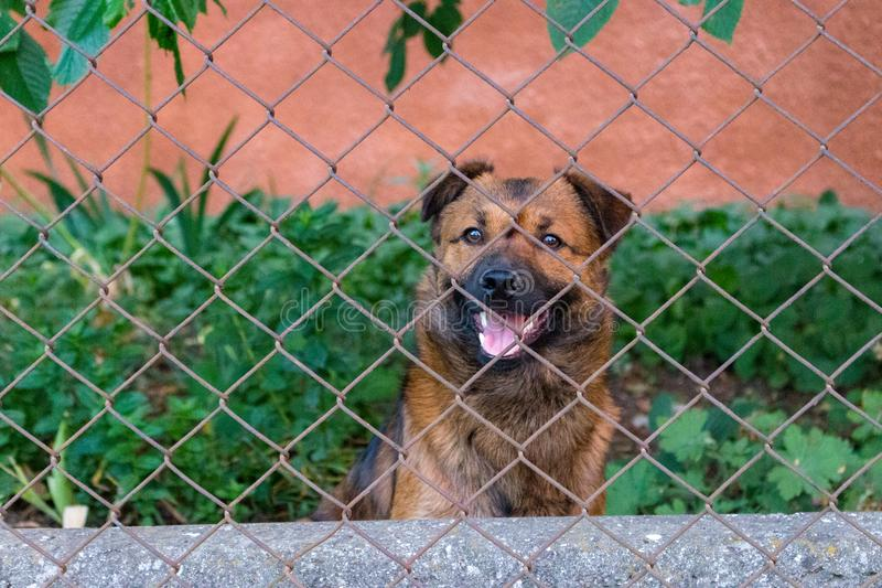 Netter lächelnder Welpe in Wartehaltung hinter Zaun Junger Hund im Hinterhof Tierfreundkonzept stockfoto