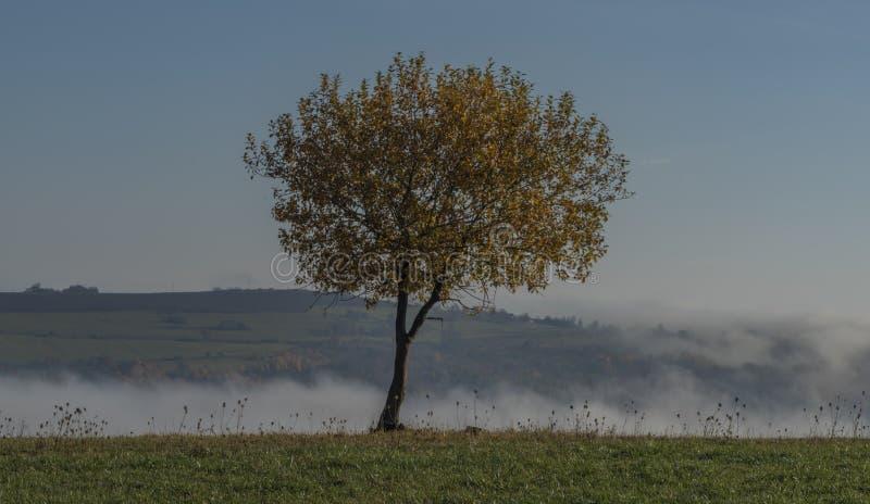 Netter Laubbaum mit blauem Himmel und Gegenteil im Tal lizenzfreies stockbild