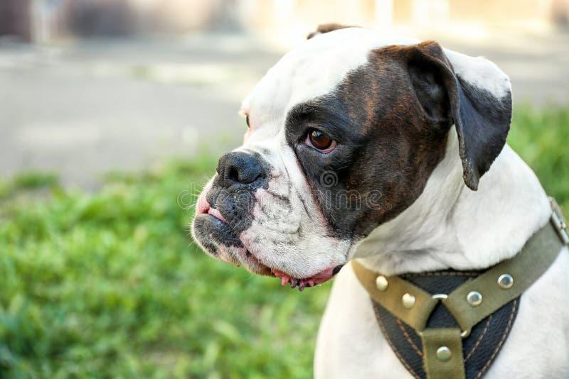 Netter lustiger Hund draußen stockfotografie