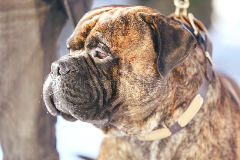 Netter lustiger Hund mit Eigentümer draußen am Wintertag lizenzfreie stockfotografie