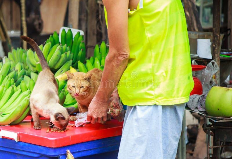 Netter männlicher Inhaber, der netten hungrigen Katzen Nahrung für Haustiere am Straßennahrungsmittelobstmarkt einzieht Tierpfleg stockfotos